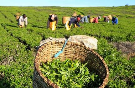 Kenyan horticulture farmers urge gov't to review policies