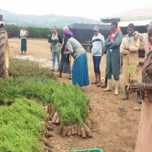 Marginpar Ethiopia undertaking extensive CSR activities
