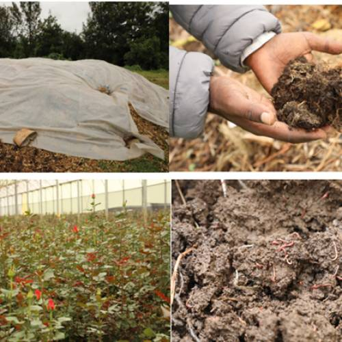Compost boosting farm productivity