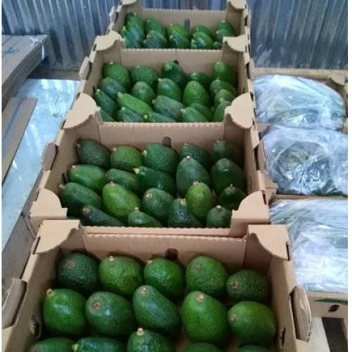 Avocado set to become Ethiopia's major export
