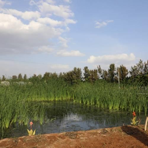 ET-Highland Flora PLC undertaking massive action on liquid waste treatment