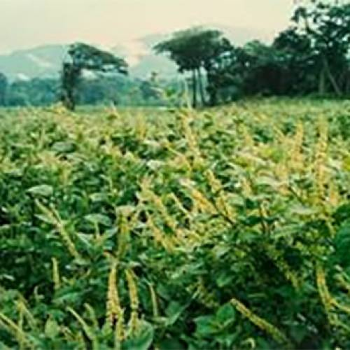 Al-Amoudi funding bio-pesticide research to curtail application of synthetics
