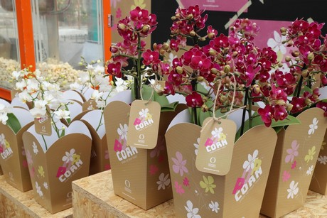 Dümmen Orange launches new phalaenopsis label 'Popcorn'