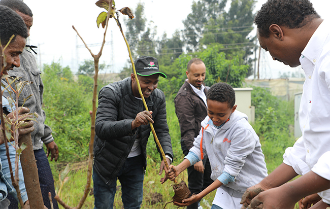 EHPEA Planted Fruit seedlings Following the National Green Legacy Initiative