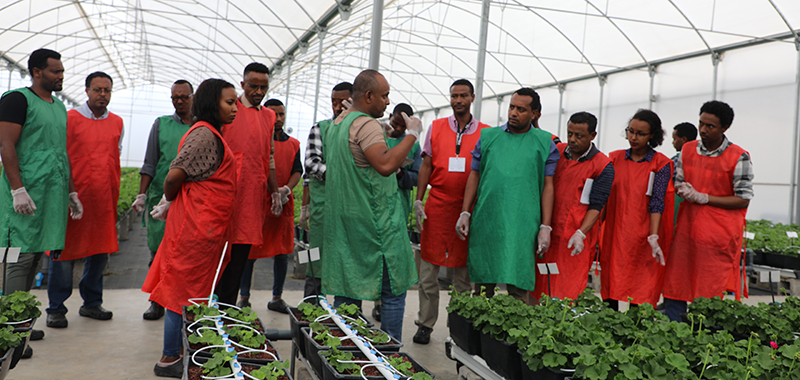 Shaping the Future of High Value Horticulture in Ethiopia