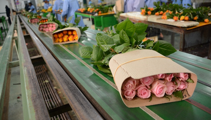 Strides of the Horticulture Sector