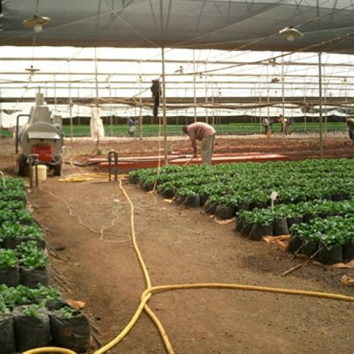 Steam Sterilization for Horticultural Growing Media