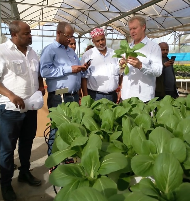 'Avocado' The New Trend of Ethiopian Horticulture Business