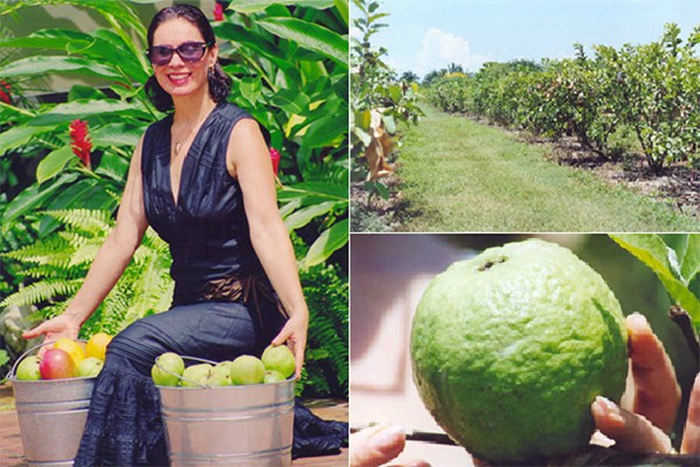 Guava varieties gaining traction in the US