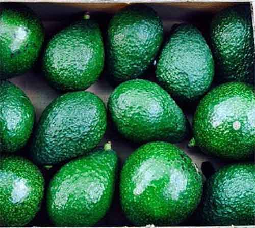 U.S. Avocado Imports Jump from all Latin American Origins
